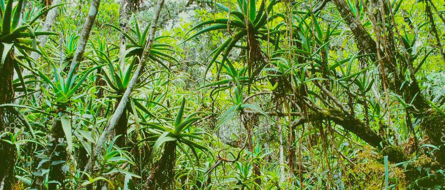 Dia Mundial do Meio Ambiente | Brasil Coleta