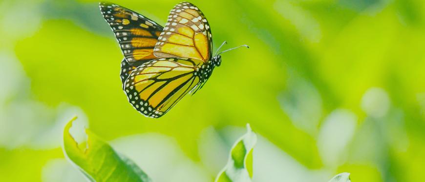 Ecologia | Brasil Coleta