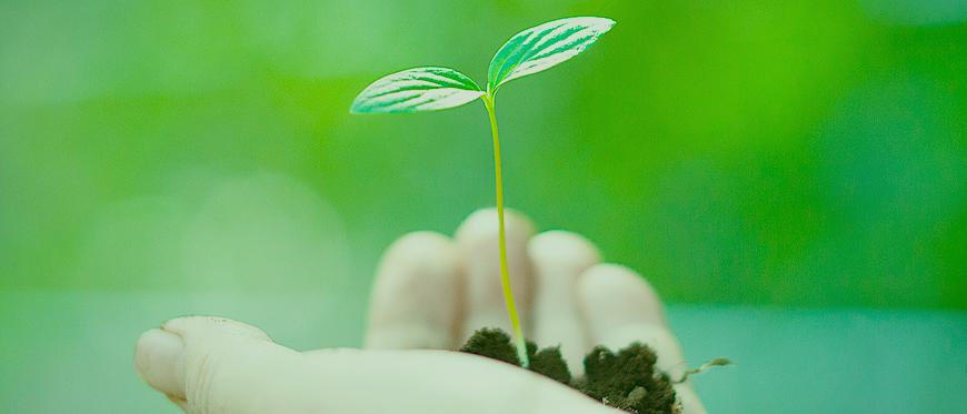 O que é sustentabilidade? | Brasil Coleta