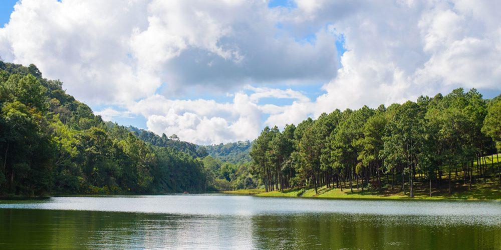 Paraná lança aplicativo que detecta novas nascentes hídricas